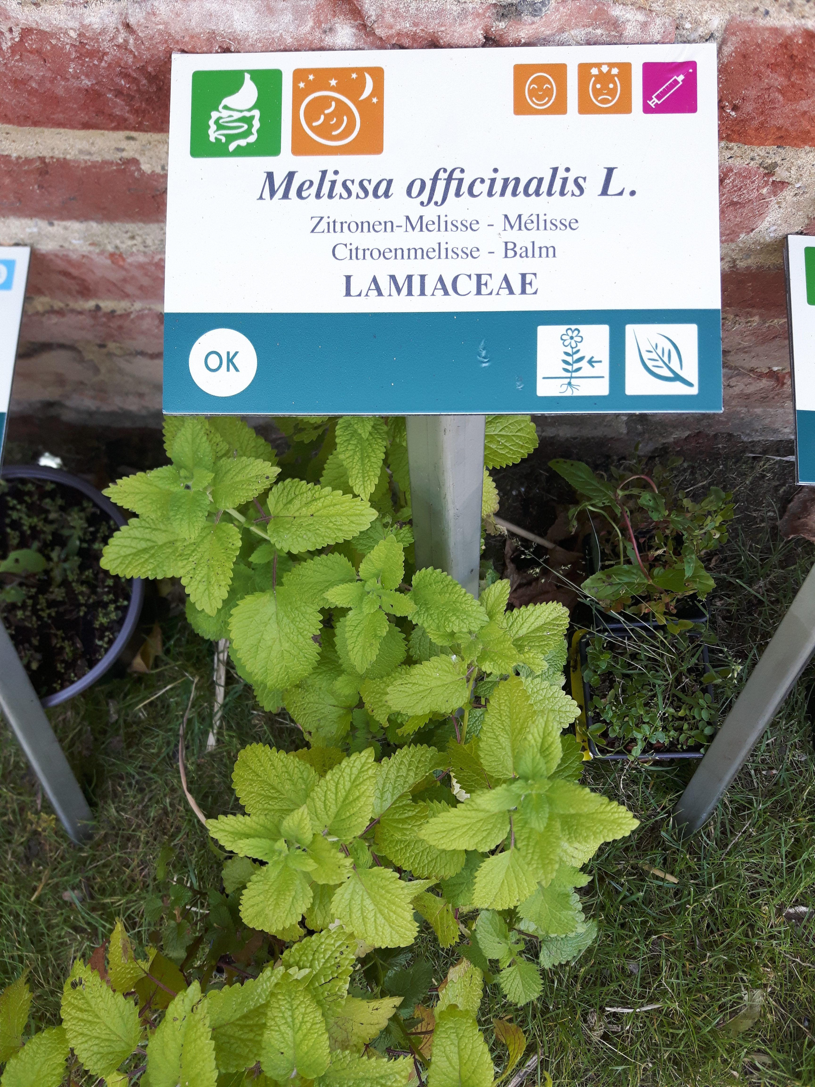 Inauguration «Herba Sana près de chez vous»