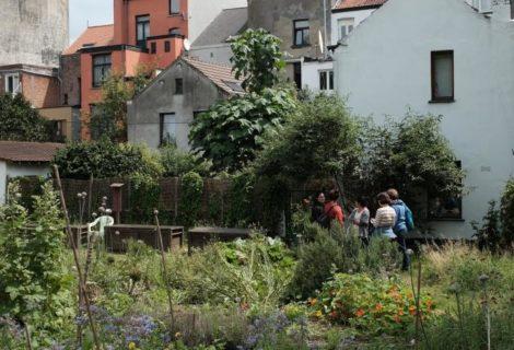 Conférence « Les plantes médicinales dans le paysage urbain contemporain » le 30/09 à 17h