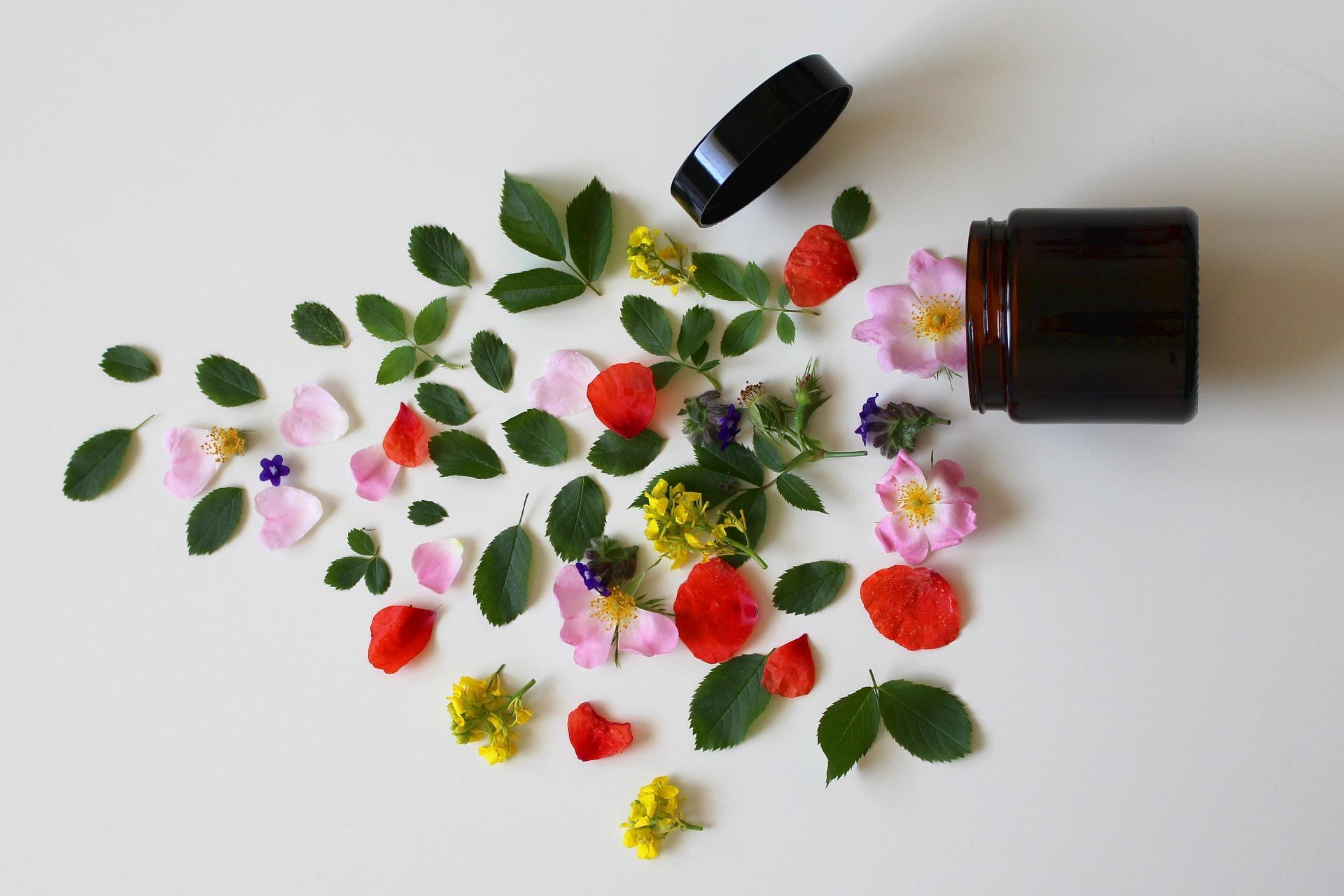 Atelier : Les fleurs de beauté et de santé le 23 août à 14h30