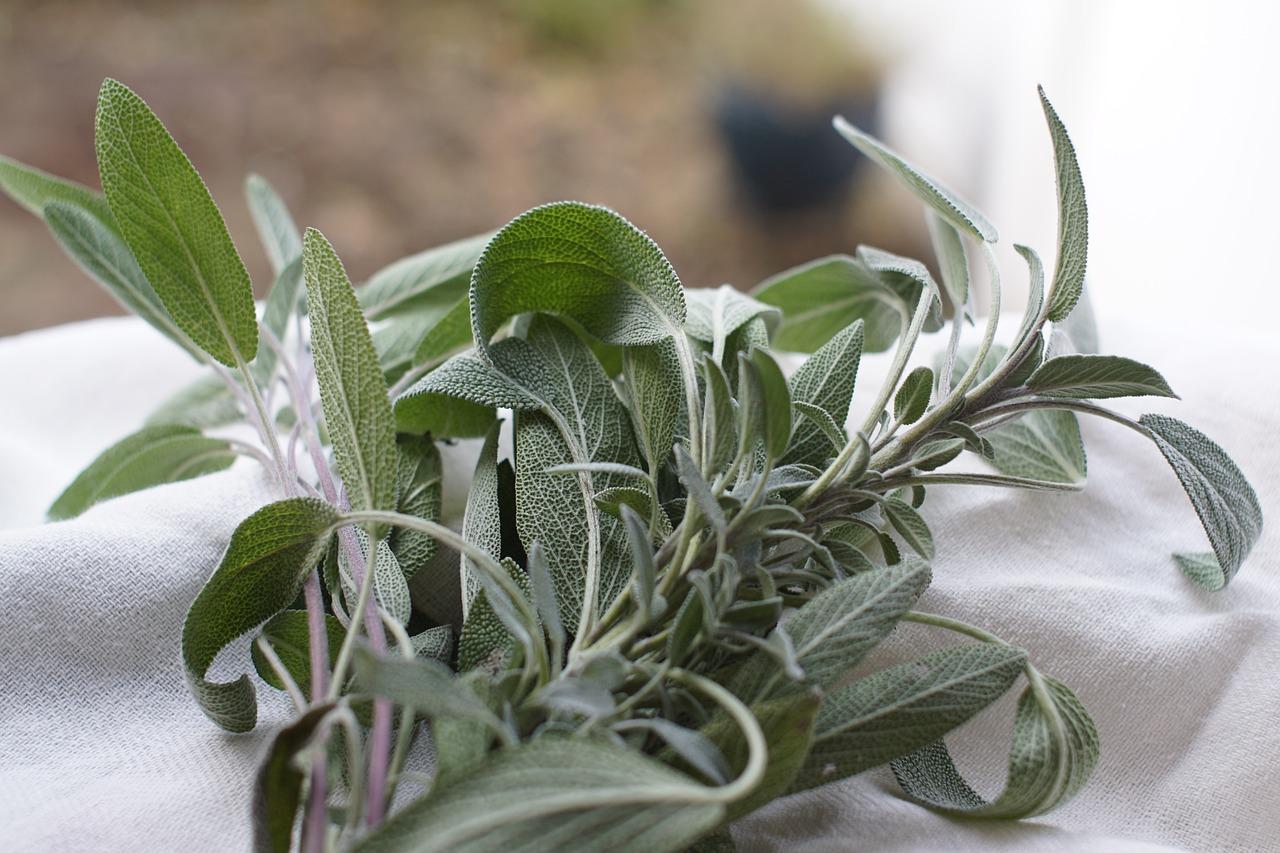 Un jardin, une plante, cuisine et astuces ! avec Christine Delplancq