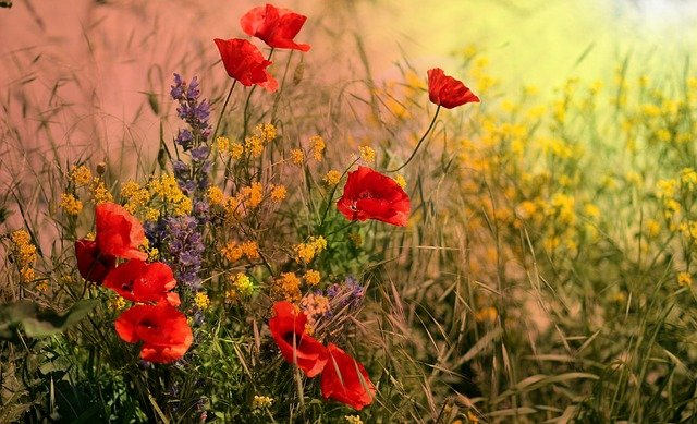 COMPLET ! Samedi 4 et dimanche 5 septembre à 14h : balade plantes sauvages le long de la Dendre…